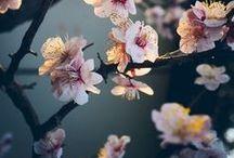Printemps / Spring / #spring #printemps #springtime #weather #sun #nature #trees #clouds #rain #cloudy #rainy #wind #season #seasons #saison #fleurs #flowers #soleil #vent #pluie #nuages