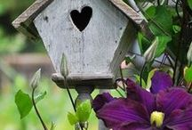 ♡ Garden / love planting because have hope in tomorrow