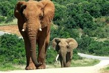 South africa / beautiful wildlife
