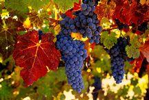 Vineyard / Just Because / by Janet Linda Ellicott