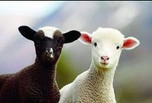 Wooly Glory / Exploring our species and power animal in all their wooly glory! Look how magnificent we all are in our varied colors and textures. How will Ewe 'Be Herd' & 'Stand Out' from the flock?