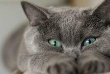 ANIMALS//Cats