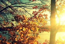 ▲Autumn* sunrise▲