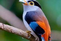 Casinhas de Pássaros