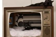 Cool stuff for cats