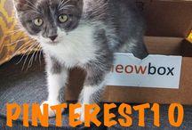 Meowbox / meowboxes!!!