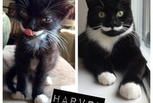 Feature Kitty / Now presenting....kitties we adore. Share with us pins of your cat and we may feature them here.