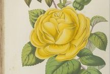 botanical prints - public domain