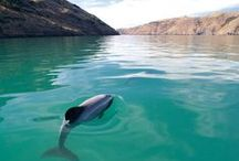 N Z ~ O U T D O O R S / Favourite Outdoor Activities & Things to See & Do in NZ from @promotemypageNZ/ If you are in NZ & want to be added to this group board comment on a pin 'add me please!'