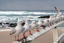 Ptaszki, ptaki, ptaszyska...
