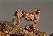 Z W I E R Z Y N I E C / duże i małe, dzikie i do przytulania, z kraju i ze świata...