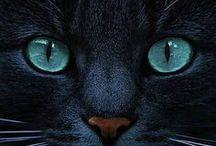 koty, kocury, kocięta...