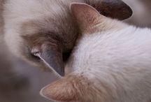 Cats 2 / by ShokoLani