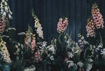+ Plant +
