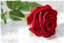 Flores / Um pouco de perfume sempre fica nas mãos de quem oferece flores. Provérbio chinês