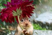 Um dia de chuva...ou sol...ou...