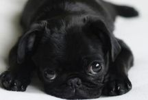 "Pug / ""Whoever said diamonds are a girls best friend must of never owned a pug"""