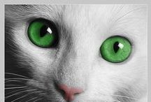 Chats - Quels Yeux !