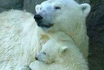 Anim - Ours et Pandas