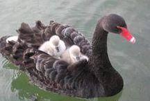 Oiseaux - Marins
