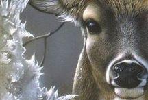 Anim - Antilope/Cerf/Faon