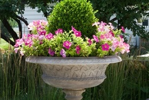 {Garden Containers} /  I love to put pretty flowers in containers / by Annette Kessler