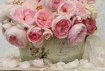 {Floral Designs}   / Beautiful ways to arrange Flowers! / by Annette Kessler