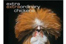 Poultry Books / A few of our favorite books about raising poultry!