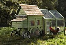 Coops and more! / Housing and Coop inspiration for your chickens.