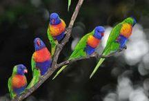 Other beautiful birds