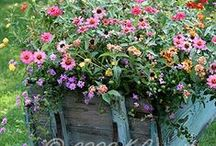 Gardening: Container Planting
