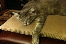 Sweet Baby Boy, Kat / My cat, Kat, who went to heaven on  June 30, 2013.  He was 11 years old.  I had him for 10.