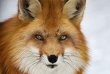 Animals, Gods beautiful creations!