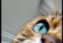 Animal Photographic