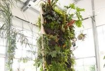 living wall. / living wall + green space inspiration