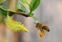 Rośliny przyjazne pszczołom