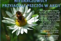 Publiczna SP w Niedarczowie Akademie Przyjaciół Pszczół