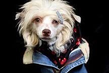 Dog's fashion / designer clothes for dogs