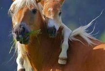 BEAUTIFUL ANIMALS / Los mas tiernos de los animales