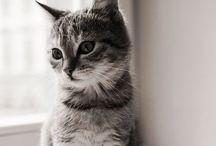 Cats❤️ / De sødeste, sjoveste og mest cute katte!!!