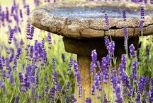 Huis -  tuin / Allerlei ideeën voor het inrichten van een tuin.