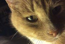 Cats of all kinds DIY/FUN/PICS / Katten divers