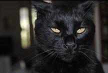 gatti, cats, chats. ... / Gatti: la mia passione!