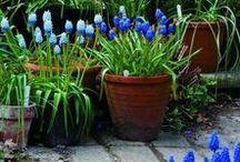 Flowers in flowerpots.Цветы в горшках