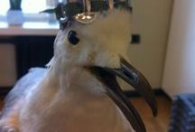 Larus argentatus / Our office mascot Lokki (lat. larus argentatus) is an easygoing, fashion-forward guy.