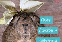 Animal Captions / We love a bit of animal humour and matching it with funny captions #dating #animals #funny
