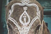 ÉLÉPHANTS / Ma passion pour les éléphants.