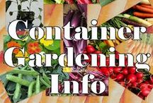 Container Gardening / Tiny space gardens