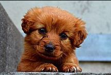 ♥︎ Puppy Love ♥︎ / Cute puppies, adorable dogs. Puppy love is the only way to describe it!