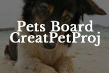 Pets / by Creative Pet Project